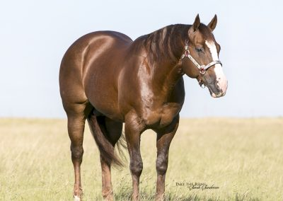 Briscoe Cat 2005 Sorrel Stallion Standing at Running T Farms