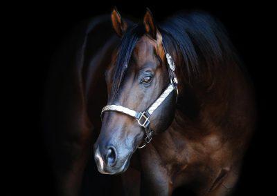 Cash Taken Leader - 2009 AQHA Bay Stallion - Standing at Running T Farms