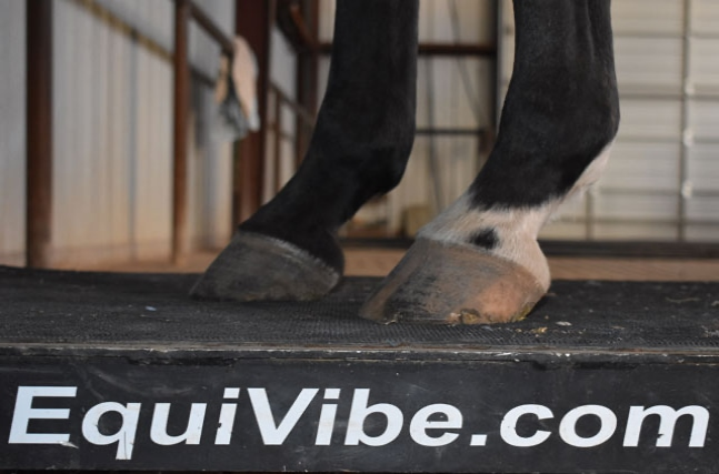 Equivibe Equine Vibration Plate at Running T Farms